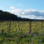 Klickitat Canyon Winery