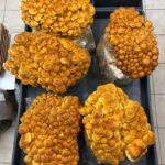 Bridgetown Mushrooms