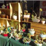 Nancy's Cactus & Succulents