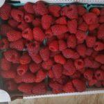 Spooner Berry Farms