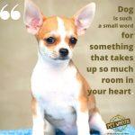 Pet Wants (Beaverton)