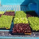 Farm Punk Salads