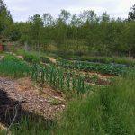 Soulstice Gardens