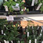 Mountain Herbal Nursery