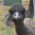 3 Feathers Emu Ranch & Farm, LLC